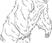 Coloriage Grizzly debout