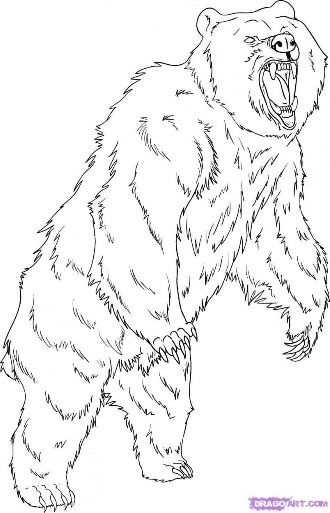 Coloriage grizzly debout dessin gratuit imprimer - Dessin de grizzly ...