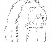 Coloriage Grizzly en couleur