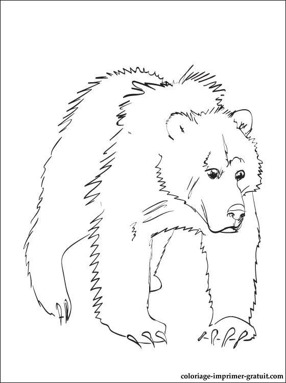 Coloriage et dessins gratuits Grizzly en couleur à imprimer