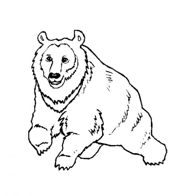 Coloriage et dessins gratuits Grizzly en marchant à imprimer