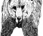Coloriage Grizzly en noir
