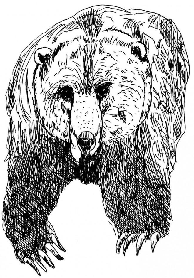 Coloriage et dessins gratuits Grizzly en noir à imprimer