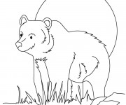 Coloriage Grizzly en plein air