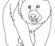 Coloriage Grizzly facile