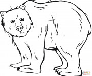 Coloriage Grizzly maternelle