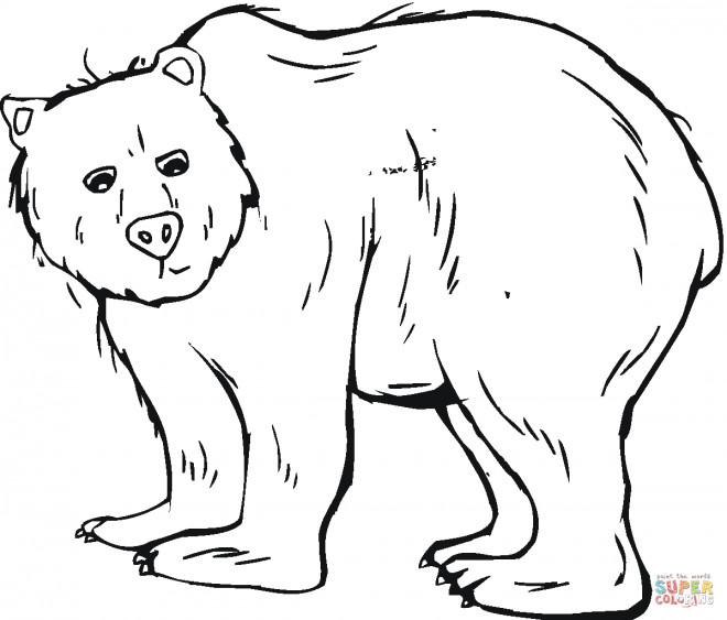 Coloriage et dessins gratuits Grizzly maternelle à imprimer