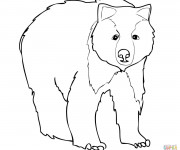 Coloriage Grizzly pour enfant