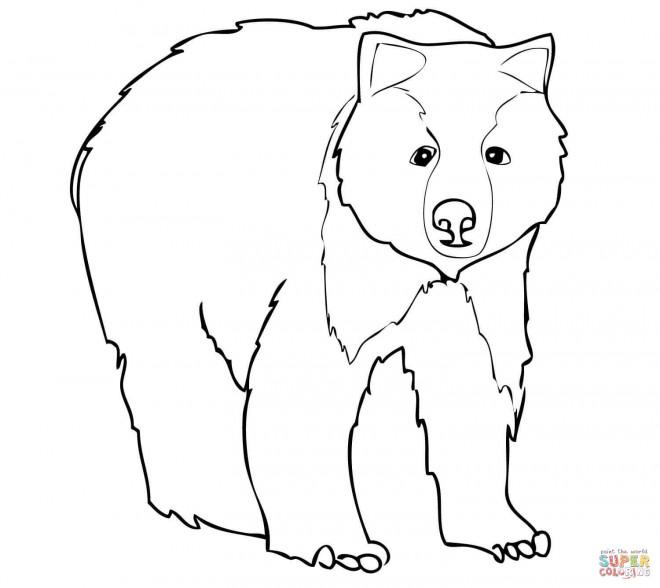 Coloriage et dessins gratuits Grizzly pour enfant à imprimer
