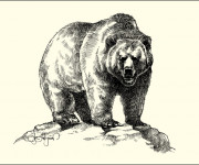 Coloriage et dessins gratuit Grizzly réalistique à imprimer