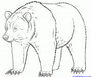 Coloriage Grizzly stylisé