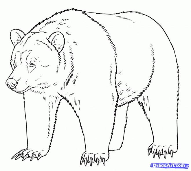 Coloriage grizzly stylis dessin gratuit imprimer - Dessin de grizzly ...