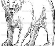 Coloriage et dessins gratuit Grizzly te regarde à imprimer