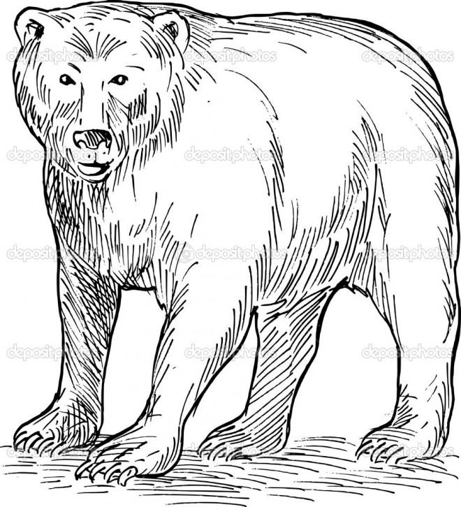 Coloriage et dessins gratuits Grizzly te regarde à imprimer