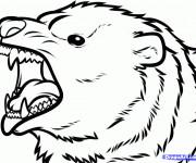 Coloriage Tête de Grizzly agité
