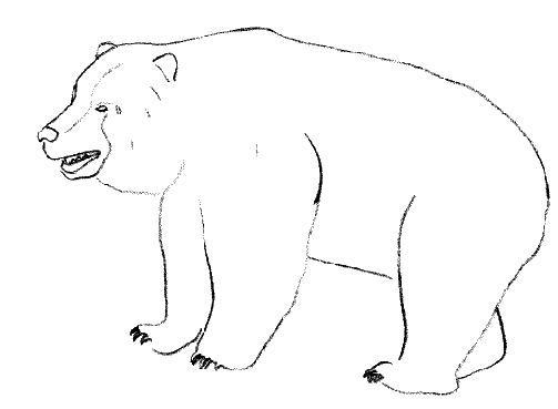 Coloriage et dessins gratuits Un gros Grizzly à imprimer