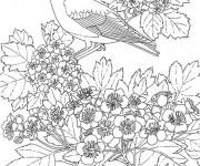 Coloriage Hirondelle au jardin