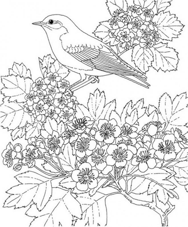 Coloriage et dessins gratuits Hirondelle au jardin à imprimer