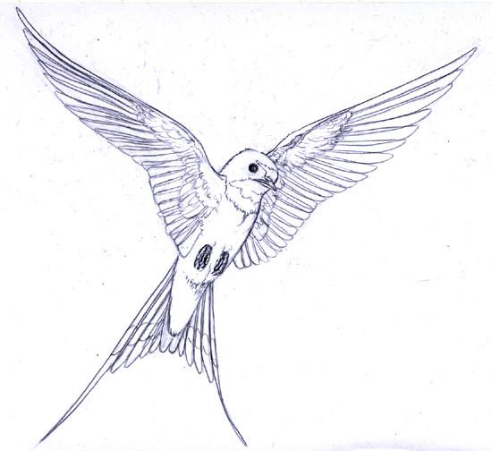 Coloriage hirondelle magnifique dessin gratuit imprimer - Coloriage magnifique ...