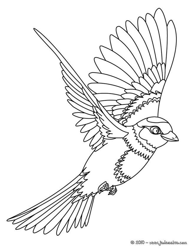 Coloriage et dessins gratuits Hirondelle maternelle à imprimer