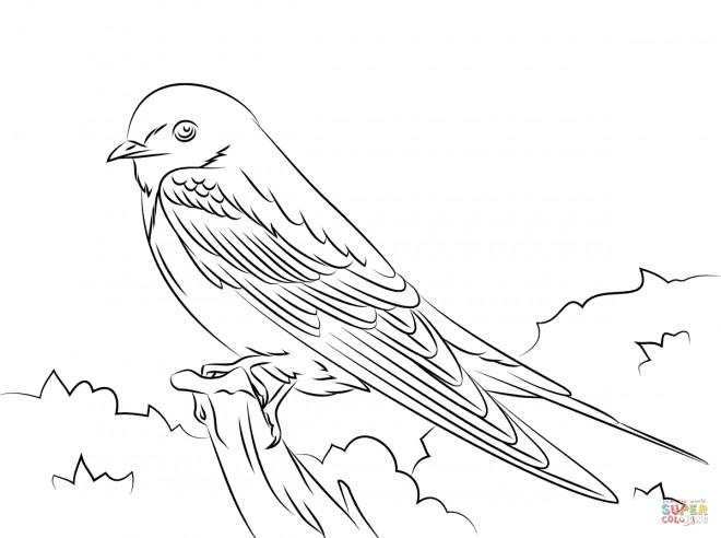 Coloriage hirondelle mignon dessin gratuit imprimer - Hirondelle coloriage ...