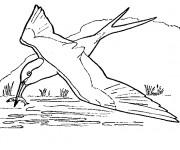 Coloriage et dessins gratuit Hirondelle pêcheur à imprimer