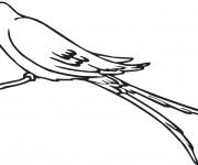 Coloriage Hirondelle stylisé
