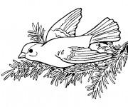 Coloriage et dessins gratuit Hirondelle sur Arbre à imprimer