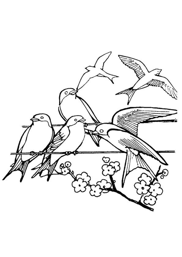 Coloriage hirondelle sur un fil dessin gratuit imprimer - Hirondelle coloriage ...