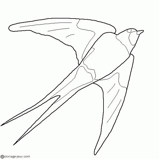 Coloriage hirondelle vecteur dessin gratuit imprimer - Jeux d oiseau qui vole ...