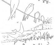 Coloriage et dessins gratuit Hirondelles se reposent à imprimer