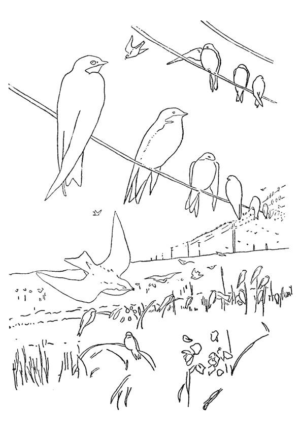 Coloriage et dessins gratuits Hirondelles se reposent à imprimer