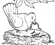 Coloriage et dessins gratuit Mère Hirondelle et ses petits à imprimer