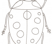 Coloriage Coccinelle simple