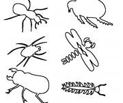 Coloriage dessin  Insecte 12