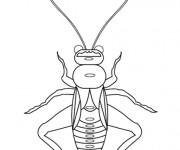 Coloriage dessin  Insecte 15