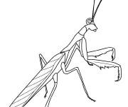 Coloriage et dessins gratuit Insecte 17 à imprimer
