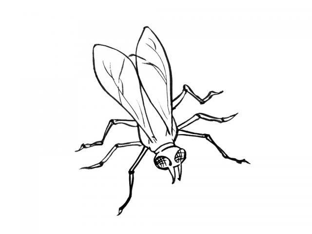 Coloriage et dessins gratuits Insecte assise couleur à imprimer