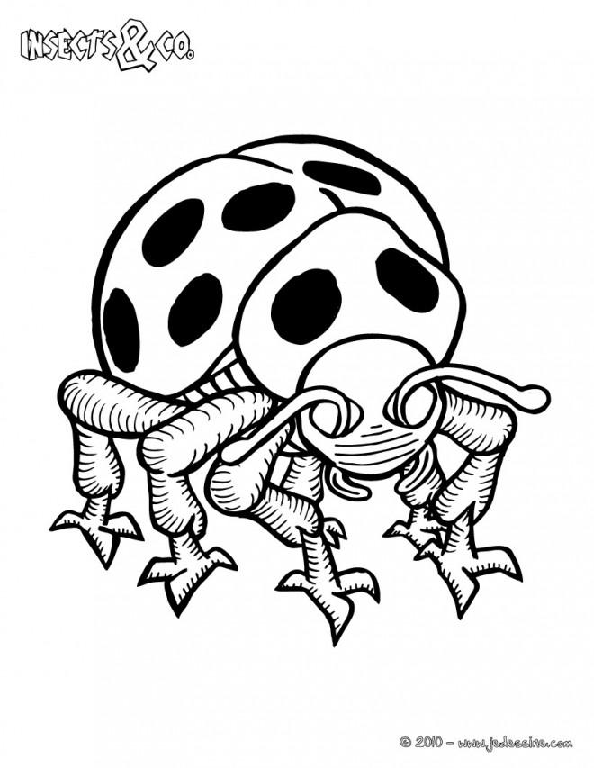 Coloriage et dessins gratuits Insecte avec des taches à imprimer