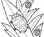 Coloriage et dessins gratuit Insecte Coccinelles à imprimer