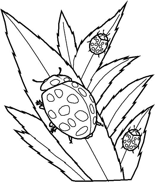 Coloriage Printemps Coccinelle.Coloriage Insecte Coccinelles Dessin Gratuit A Imprimer