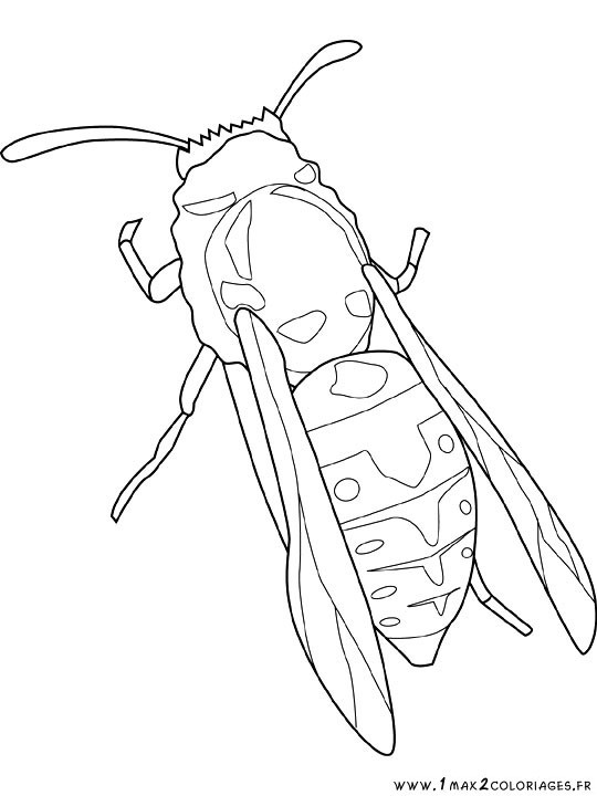 Coloriage et dessins gratuits Insecte en couleur à imprimer