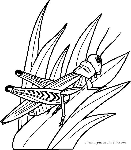 Coloriage et dessins gratuits Insecte en Hiver à imprimer