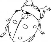 Coloriage et dessins gratuit Insecte en Printemps à imprimer