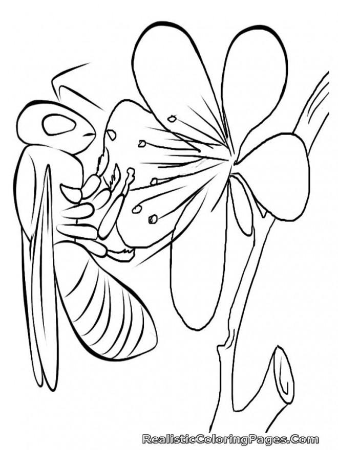 Coloriage et dessins gratuits Insecte et nourriture à imprimer