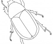 Coloriage Insecte facile