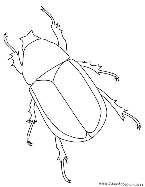Coloriage et dessins gratuits Insecte facile à imprimer