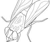 Coloriage et dessins gratuit Insecte Mouche à imprimer