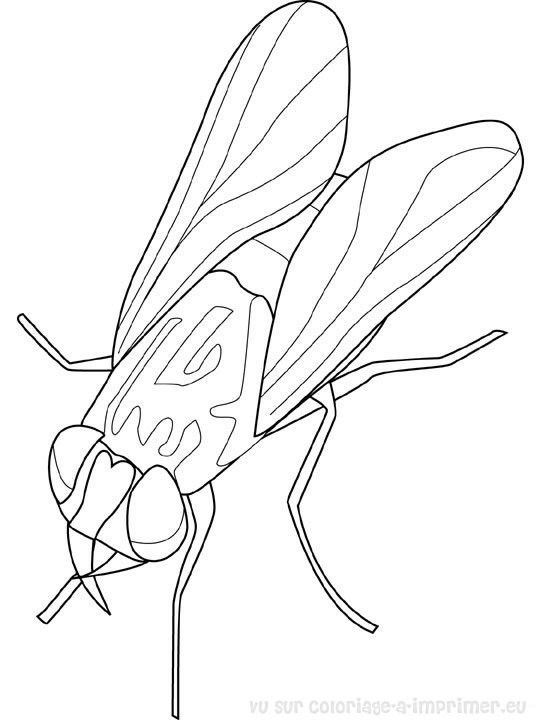 Coloriage et dessins gratuits Insecte Mouche à imprimer