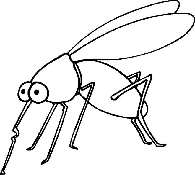 Coloriage et dessins gratuits Insecte moustique à imprimer
